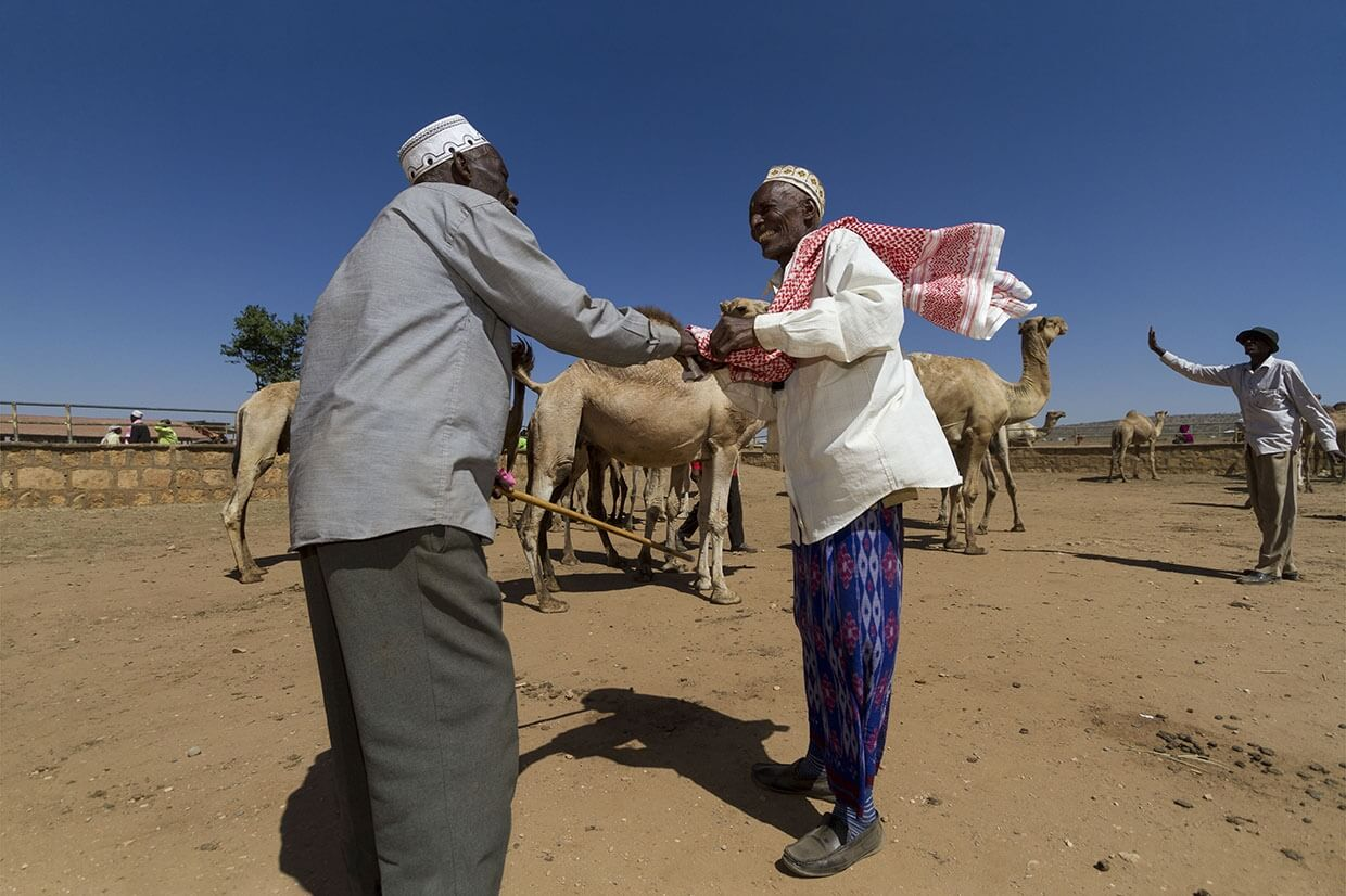 Two men greeting each other with camels in the background