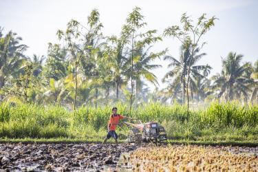 Pak Sahwil, 42, plows his fields. He is a rice farmer on Lombok in eastern Indonesia. Photo: Ezra Millstein