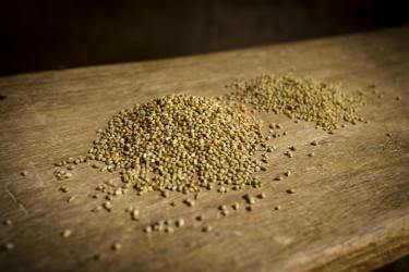 A pile of golden millet on a wooden table in niger