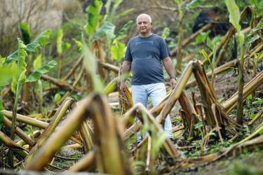Elvin, 59, surveys the damage to his family's plantain farm following Hurricane Maria in Puerto Rico. Puerto Rico is at serious risk of future disasters due to climate change. Photo: Jonathan Drake for Mercy Corps
